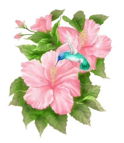 hibiscushumming